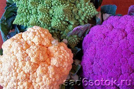 Цвітна капуста - вирощування, користь, сорти
