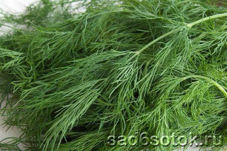 Як вирощувати пряносмакових рослини?