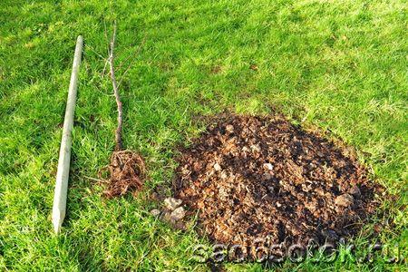 Добрива для осінньої посадки плодових дерев
