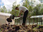 Внесення органічних добрив у грунт восени