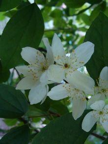 Ревінь в саду - краса і користь